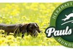 Pauls Beute - natürliche Hundenahrung