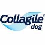 COLLAGILE dog