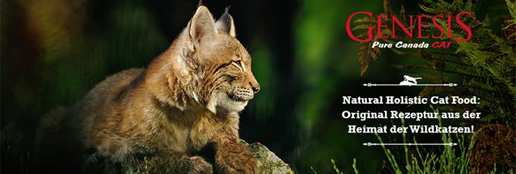 genesis-titelbild-cat